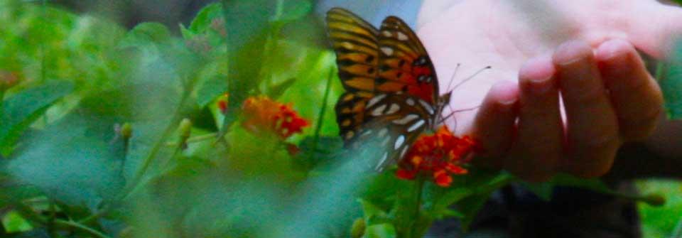 3butterfly