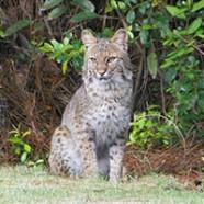 The City of Orange Beach Wildlife Center