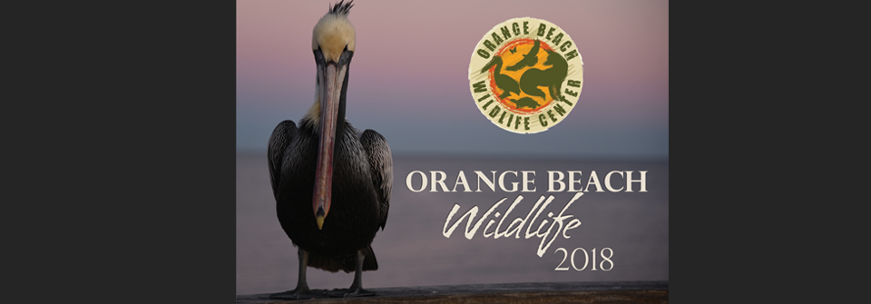 Orange Beach Wildlife Calendar